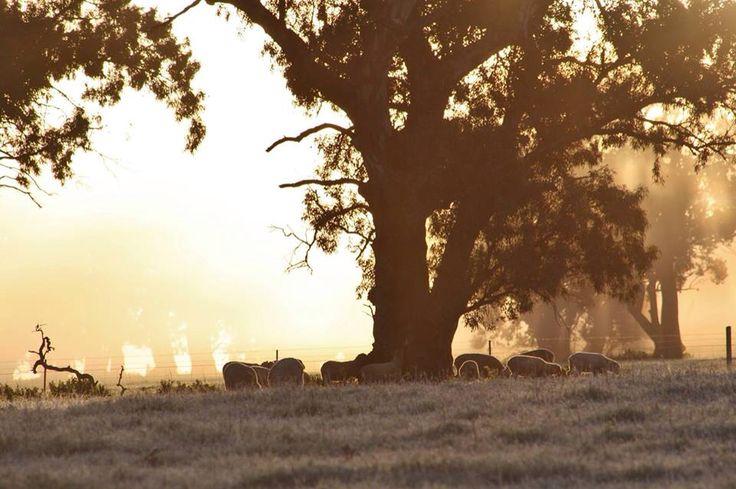A foggy sunrise in Melrose
