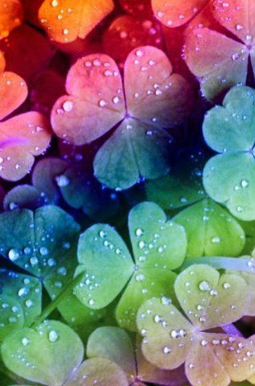 rainbow clovers – #clovers #fondecran #Rainbow – #clovers #fondecran