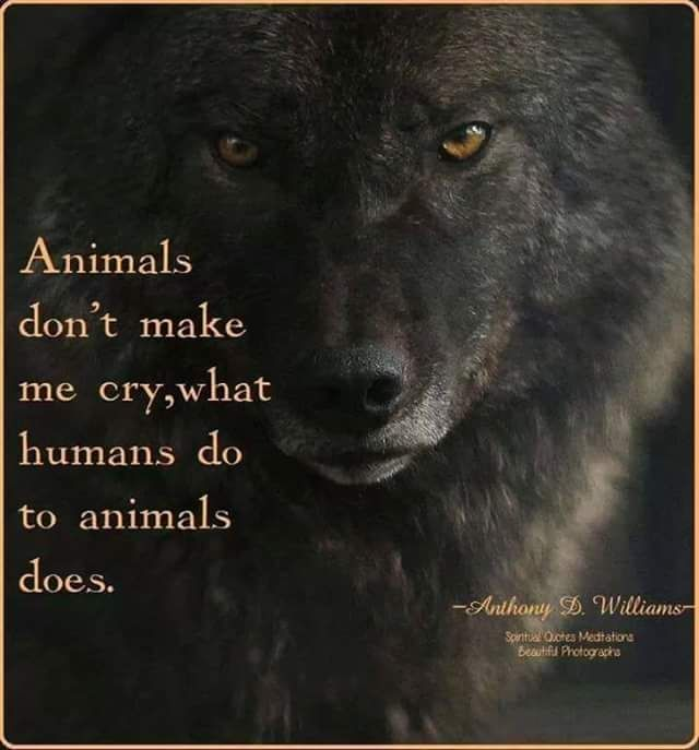 People who abuse animals are the only people who bring out the hate in me I try to contain.