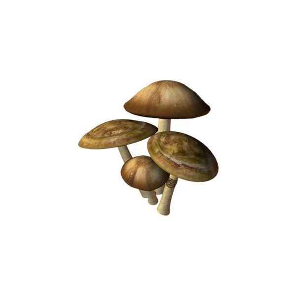 Medilium — альбом «Сказочная тема / Fairy Tale» на Яндекс.Фотках ❤ liked on Polyvore featuring mushrooms