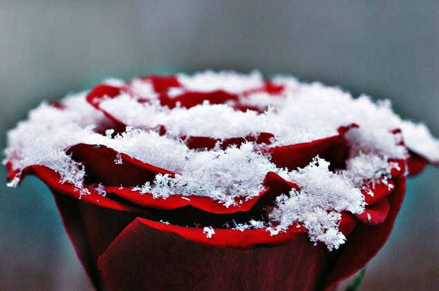 #Love: Happy Rose Day!!...: http://www.swostihotels.com/