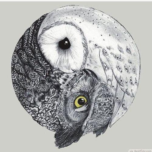 Stunning ying yang owls by @ Richards  Use...