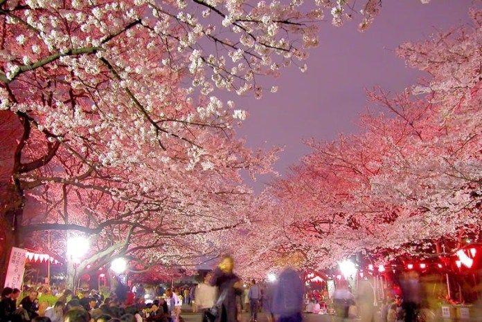 10 Interesting Japanese Festivals Japanese Festival Cherry Blossom Japan Matsuri Festival