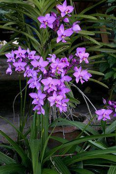 orquideas terrestres - Buscar con Google