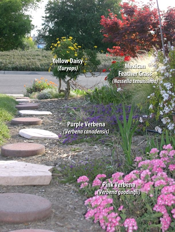 Some native plants are drought tolerant as well as low for Low maintenance drought tolerant plants