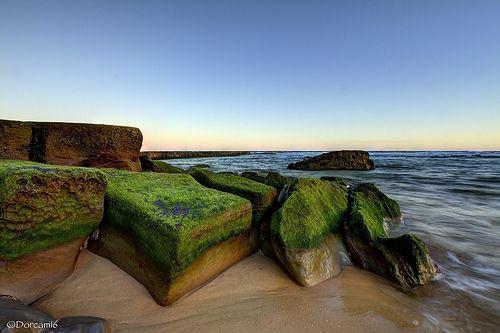 Mossy Rocks. Bar Beach, Newcastle NSW, Australia