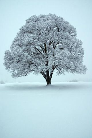✯ Tree in Snow Land