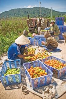 Heifer International - building sustainable resources