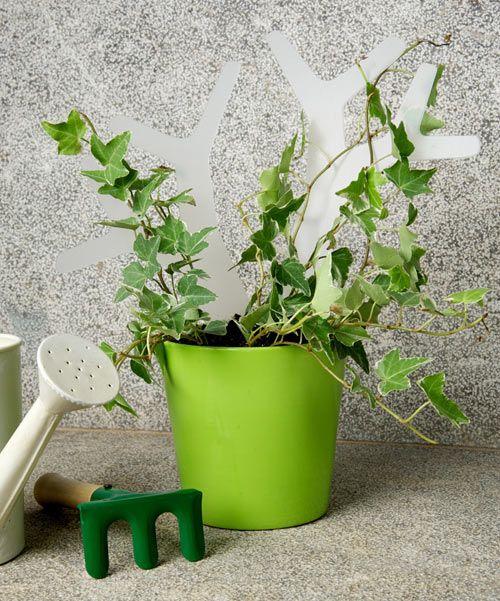 Get Out! Green Kit Gardening Collection by Bubble Design, celosia para enrredaderas en este mismo articulo........