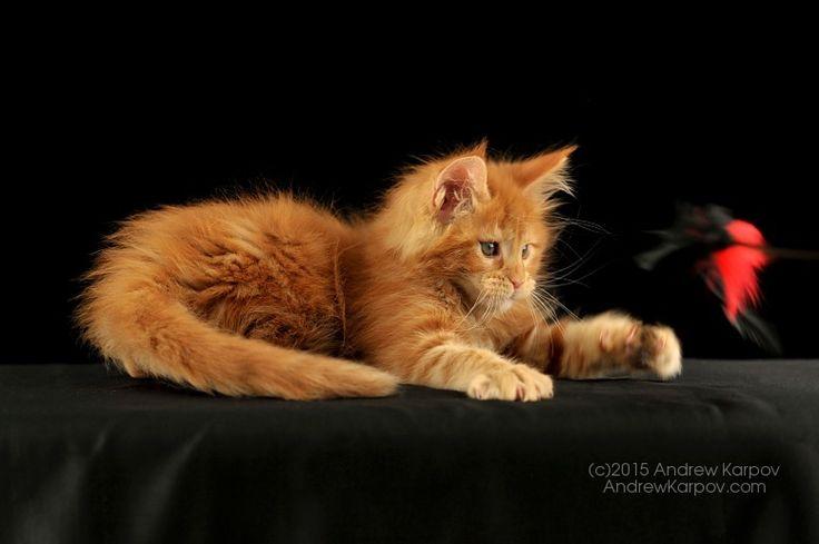 #cat #kitty beautiful and cute ♥♥♥