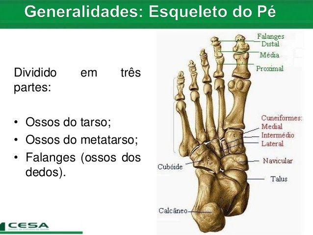 metatarso anatomia | Aula 06 radiologia - anatomia do esqueleto apendicular - tarso, met…
