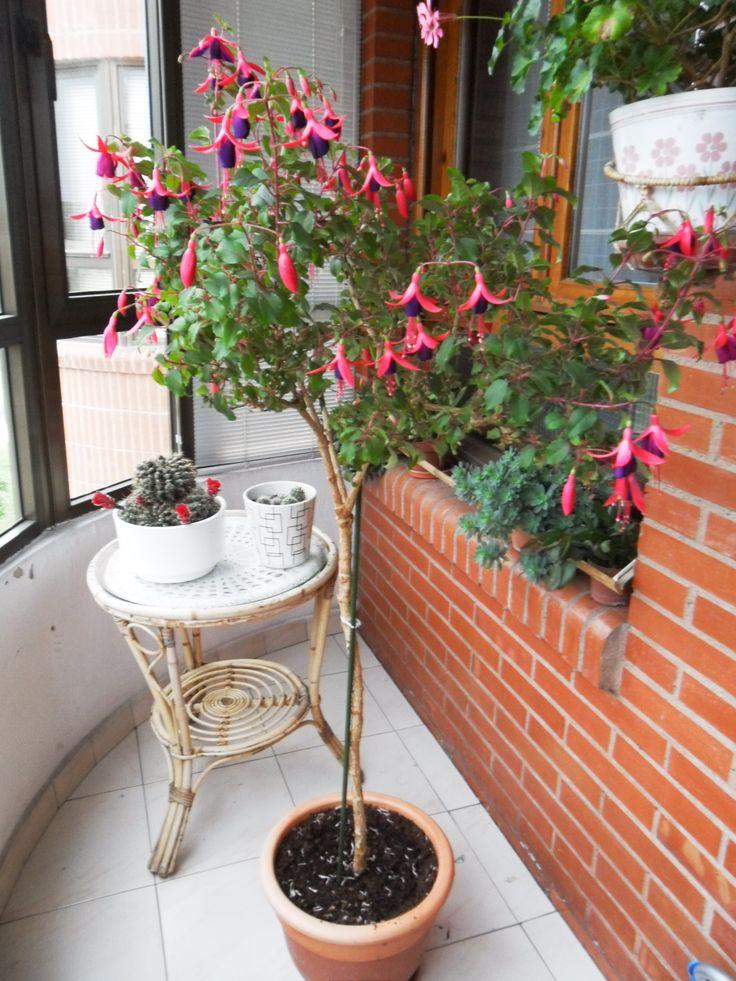 15 mejores im genes sobre mi jard n privado en pinterest - Arbolitos para jardin ...