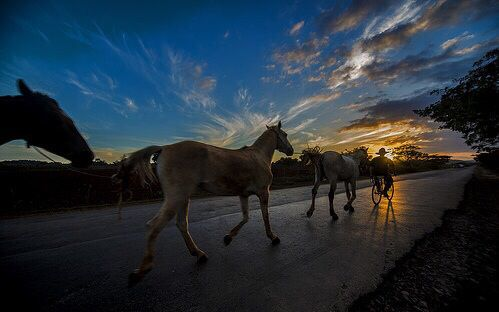 Horse Riding in #Vinales #Cuba #USA - at Casa Renga y Julia - #Cubatrip Explore a Tabacco Farm - Website booking casavinales.jimdo.com  #youtube  Video https://youtu.be/fiHJnmEnWYY