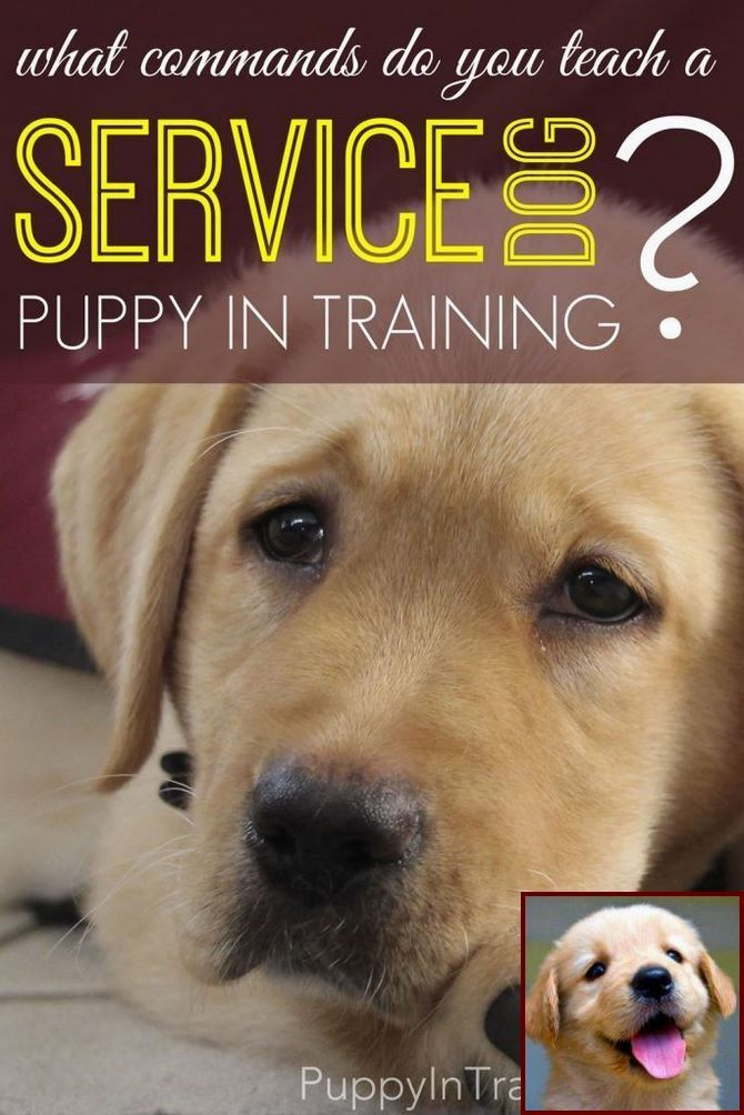 Potty Training A Puppy Near Me And Clicker Training For Dogs
