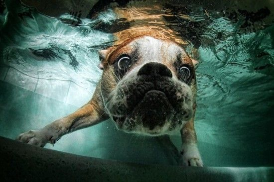 Diving Dogs Pictures!