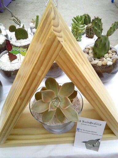 Graptopetalum paraguayense en triangulo colgante de madera