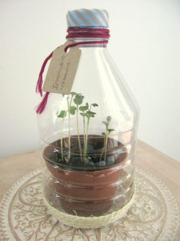 M s de 25 ideas incre bles sobre mini invernadero en - Mini invernadero casero ...
