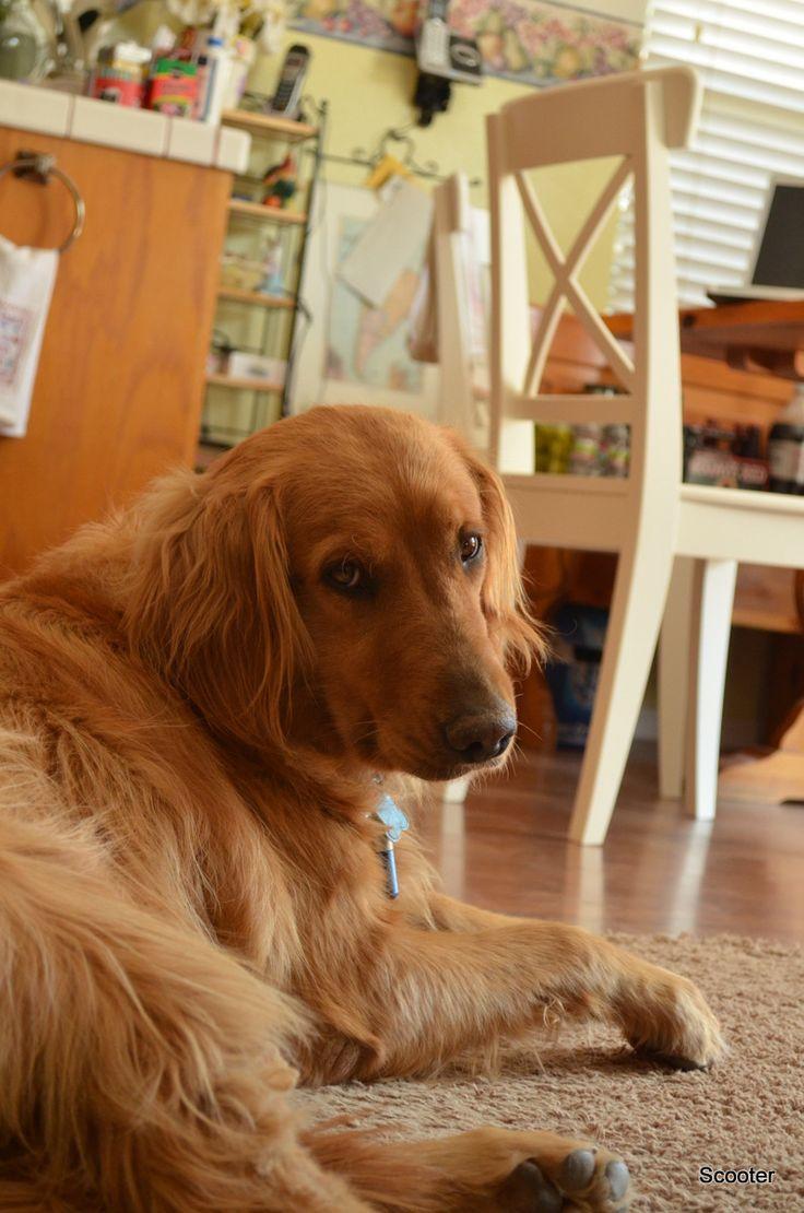 Cute puppy, Belle.
