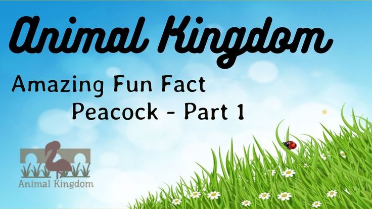 Animal Kingdom - Amazing Fun Fact about Peacock – Part 1
