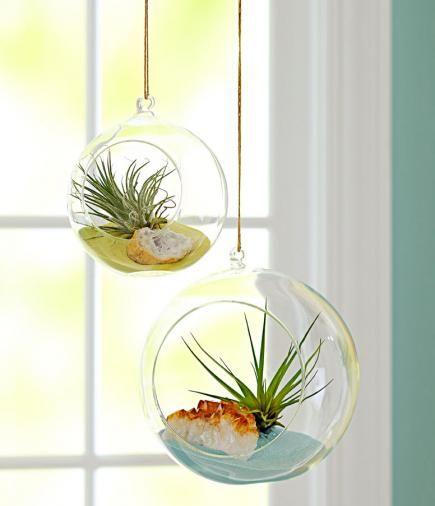 38 Best Beautiful Indoor Plants Images On Pinterest