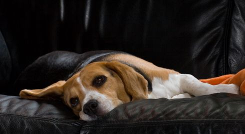 How To Recognize & Prevent One of the Most Common Dog Illnesses: Kennel Cough