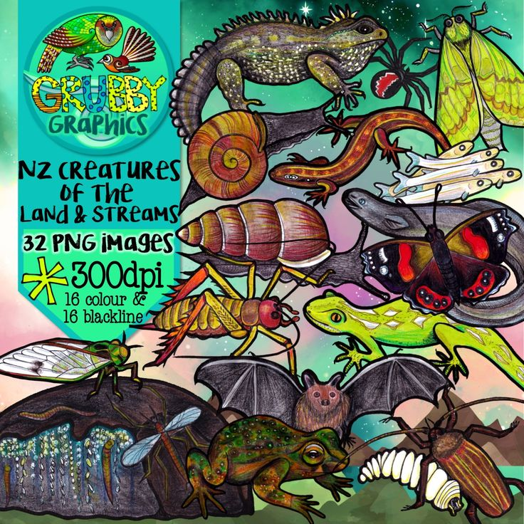 New Zealand's lack of mammals (apart from our native bats) has given lots of other interesting creatures a chance to shine! This selection of clip art contains some of the rarely seen but fascinating animals (including insects, invertebrates and reptiles) that are found in New Zealand's bush and waters... This set contains 32 images (16 colour and 16 blackline) as high quality (300 dpi) PNGs with transparent backgrounds.