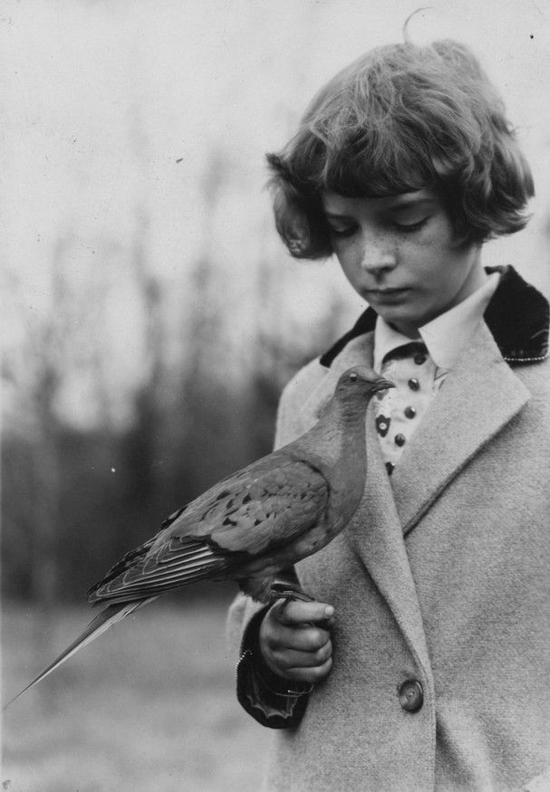 Girl with Passenger Pigeon. The extinction of the Passenger Pigeon had two major causes: commercial exploitation of pigeon meat on a massive scale and loss of habitat. Another significant reason for its extinction was deforestation.