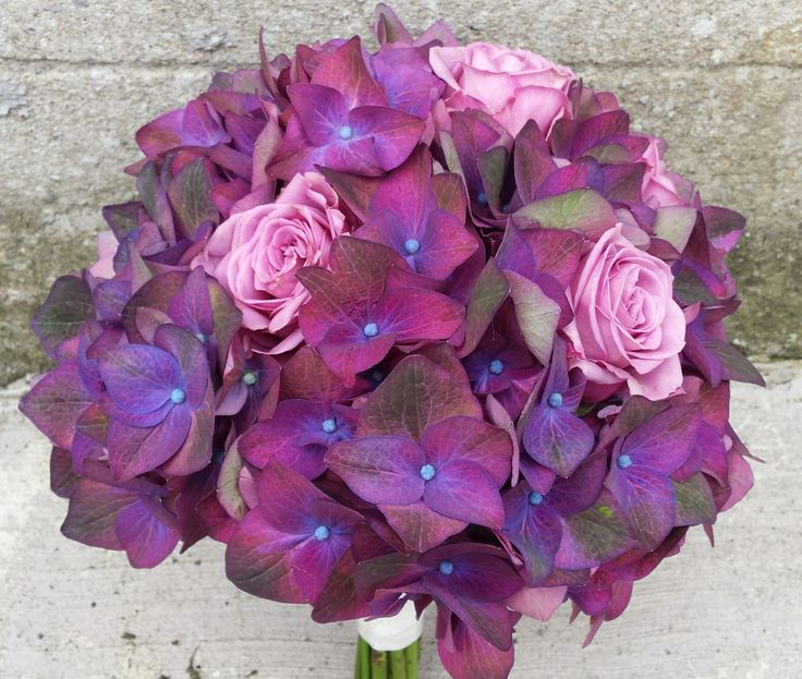 Fabulous purple hydrangea and Coolwater roses.