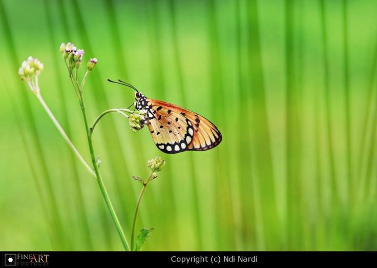 Butterfly-1 by Ndi Nardi   FINEART-PORTUGAL