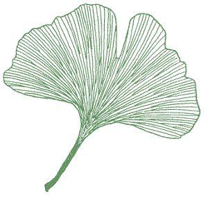 https://www.quia.com/files/quia/users/aycockrg/Leaf_Shape_fan