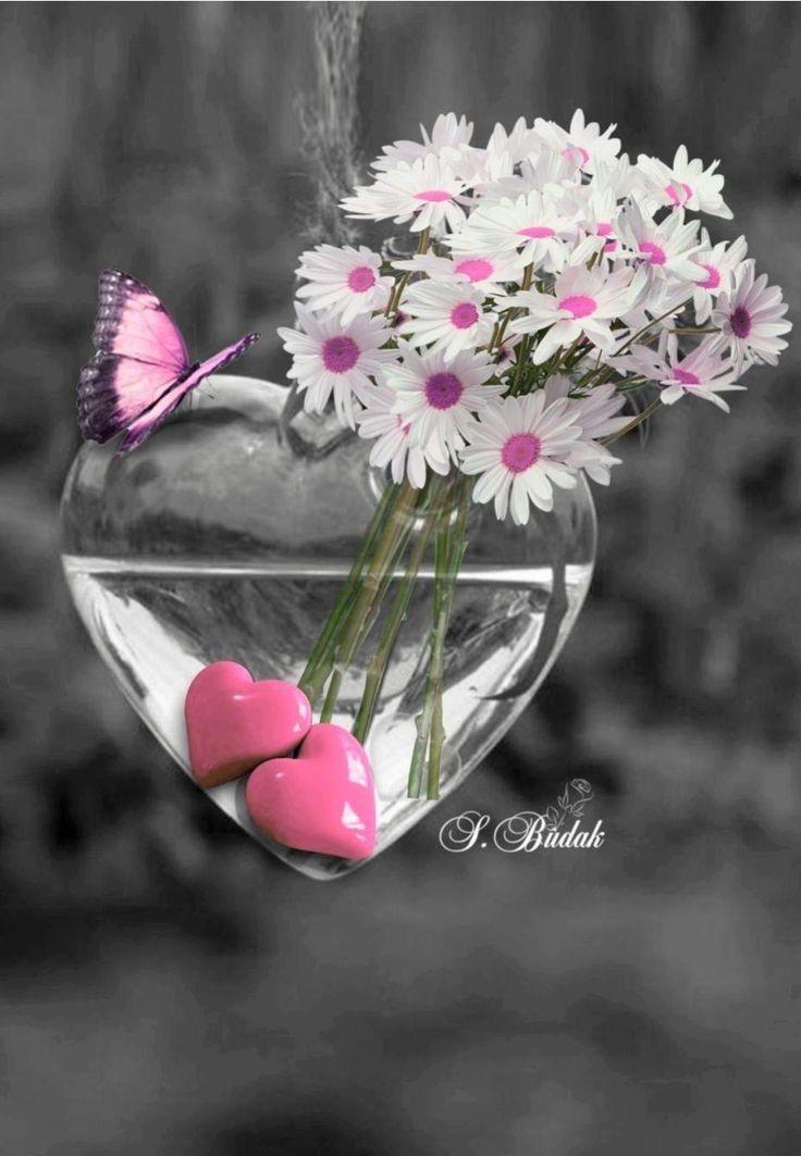 إشراقة الثلاثاء7 5 19 2رمضان1440هجري إذا جاء رمضان تهي أت جنة الرحمن للطائعين إذا جاء رمضان أغلقت Beautiful Flowers Color Splash Photography Color Splash