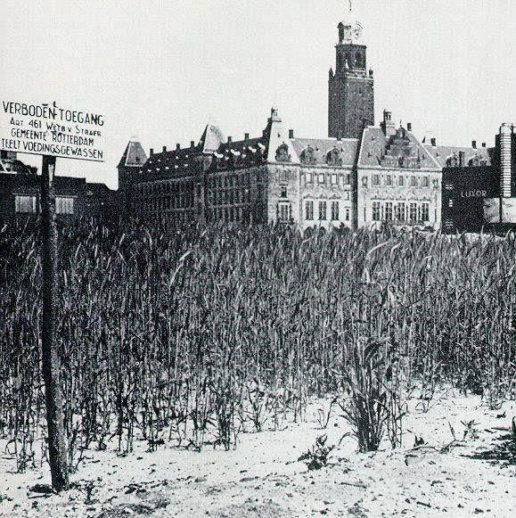 Oorlogstijd in Rotterdam-centrum. Het telen van gewassen in 1943. De foto komt van de website skyscrapercity.com