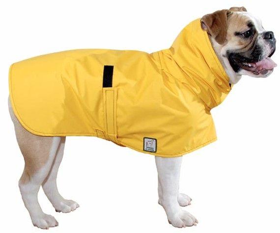 ENGLISH BULLDOG Rain Coat, Dog Raincoat, Waterproof Dog