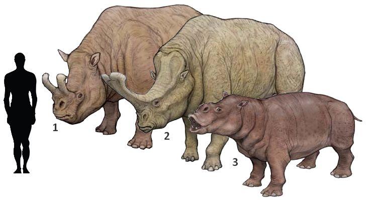 metamynodon planifrons dinosaurus and prehistoric creatures pinterest prehistoric prehistoric anima