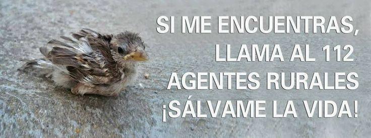APAEC (Asociación Protectora de Animales Exóticos de Cataluña): AYUDALOS A SOBREVIVIR!