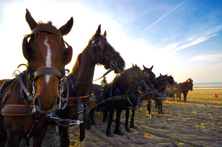Span of Control - Actieve teambuildingsactiviteit met paarden. Gericht op leiderschaps- en samenwerkingsvaardigheden. Een onvergetelijke en waardevolle ervaring!