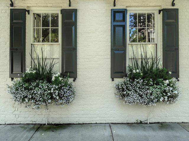 """flower boxes with white snapdragons (spikes), white petunias, annual trailing white lobelia and lamium maculatum album or """"White Nancy"""" (the greens with the silvery leaves)"""