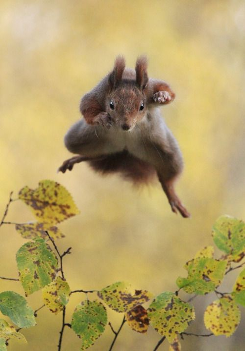 "Previous pinner said, ""magicalnaturetour: Kungfu Squirrel by Julian Rad"""