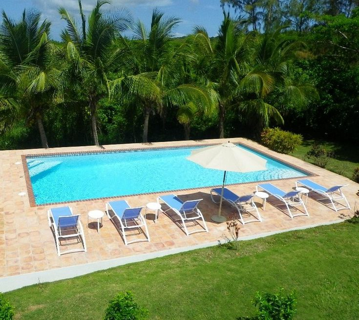 Swiming Pools Coconuts Trees With Blue Pool Loungers Also