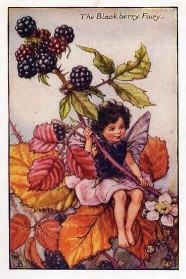 Blackberry Flower Fairy » Flower Fairy Prints- Vintage Fairy Prints by Cicely Mary Barker for sale