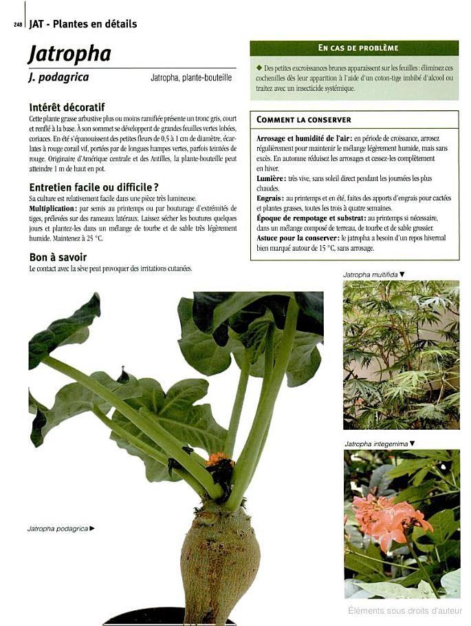 17 meilleures images propos de growing plants sur for Encyclopedie plantes interieur