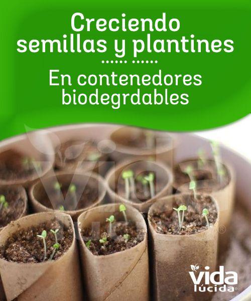 Aprendiendo a crecer semillas en contenedores biodegradables