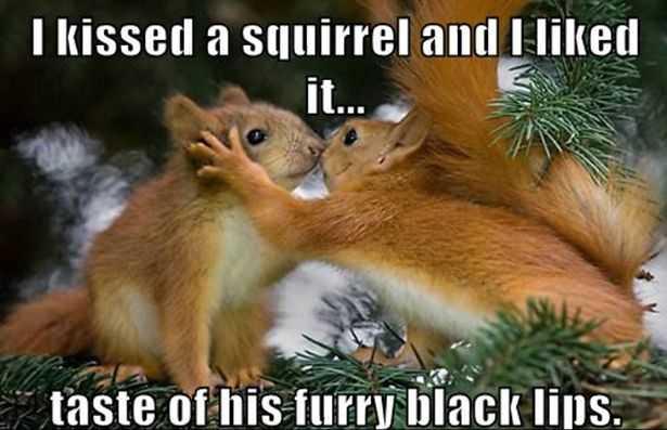 Funny Squirrel Memes Together With Funniestmemes Funniest ...