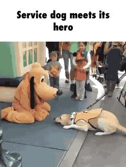Service dog meets its hero GIF