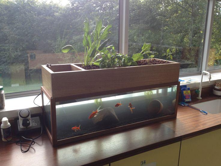 135 best images about aquaponics self cleaning aquarium for Aquaponics aquarium
