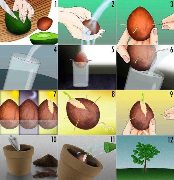 #Infografía Como plantar un hueso de aguacate y comer aguacates toooda la vida #residuos = #recursos