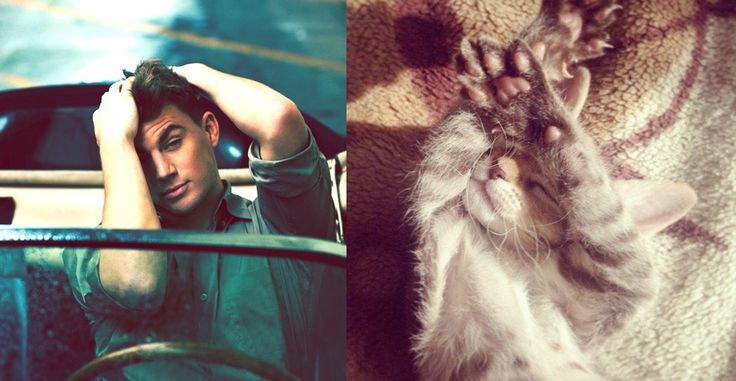 "Série ""Des hommes versus des chatons"",  ""Hot guys versus kittens"". Actor Channing Tatum."
