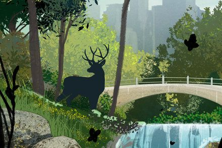 On Safari in the City: A Guide to Urban Wildlife Viewing by ELAINE GLUSAC