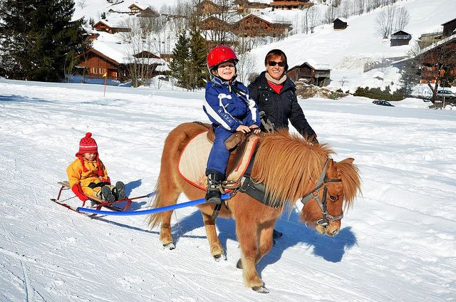 thierry-milherou-skijoering-poneyluge-2013 (15)   Flickr: partage de photos!