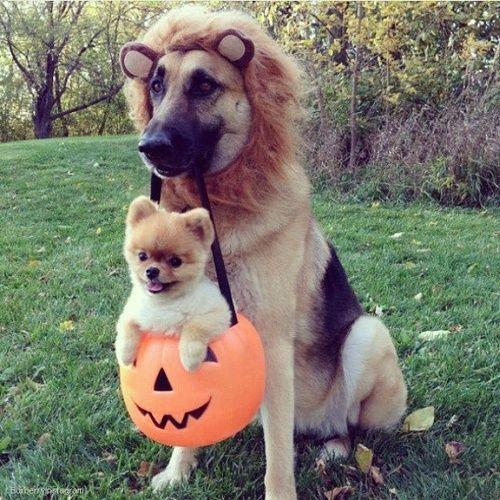de hond draagt de kat